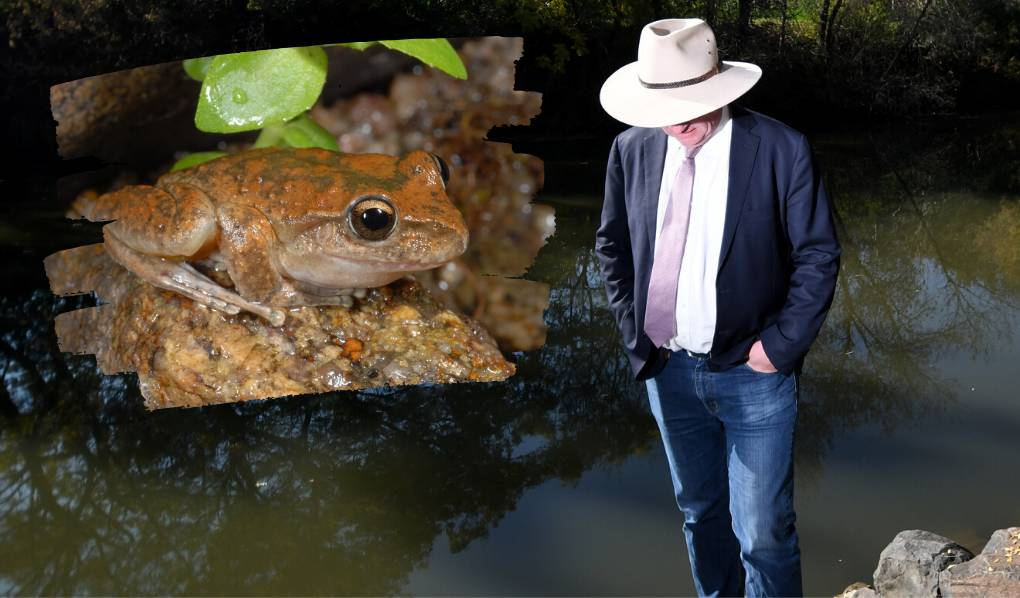 Frog Barnaby Joyce uses as 'green tape' gone mad example is locally extinct