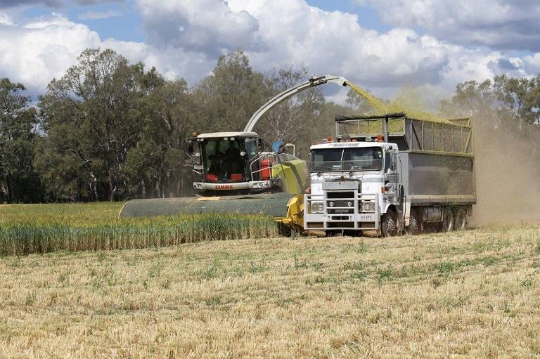 BACK IN VOGUE: A series of LLS webinars is set to help farmers make the most out of their silage options ahead of this year's harvest. Photo: Supplied