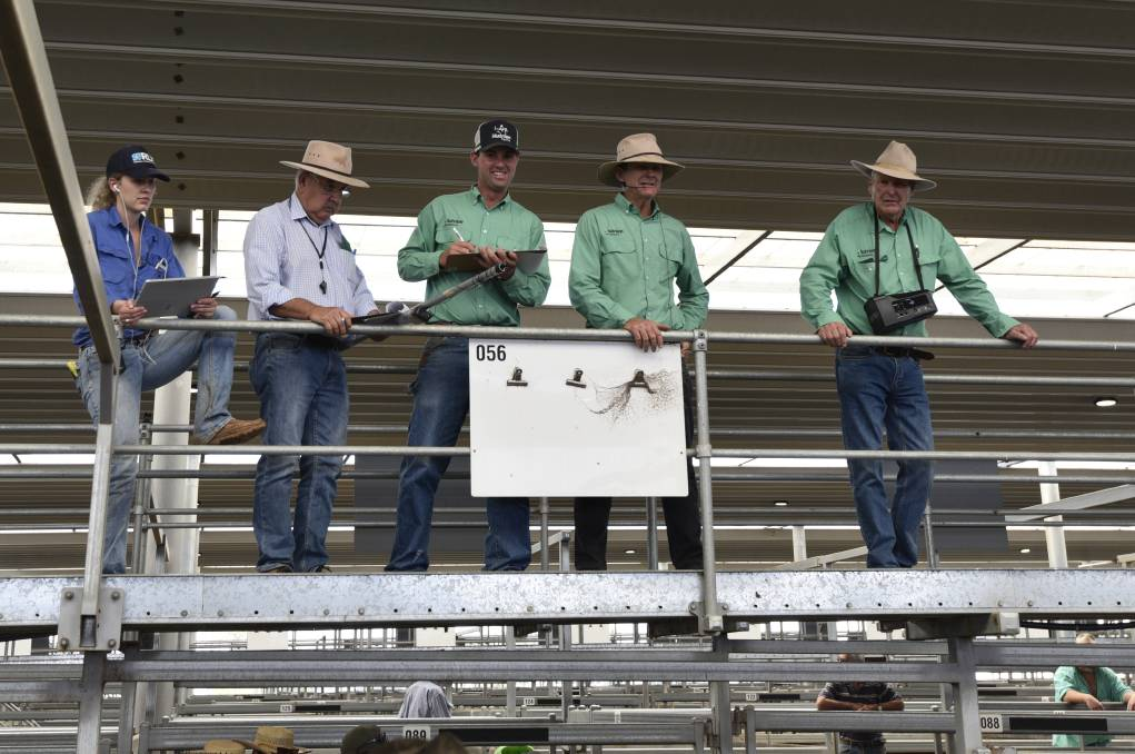 STRENGTH TO STRENGTH: Strong competition has continued to drive high prices at the Tamworth saleyards.