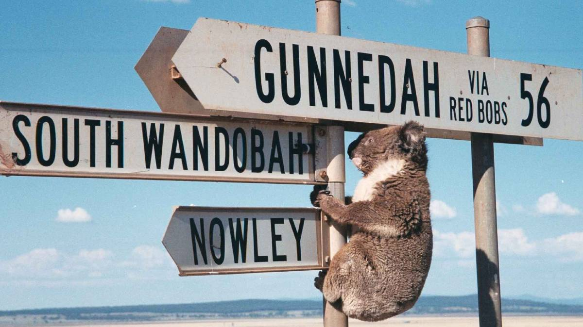 SHOW YOUR INTEREST: Gunnedah Shire Council is seeking an operator for a future koala park and education centre to be established in the town.