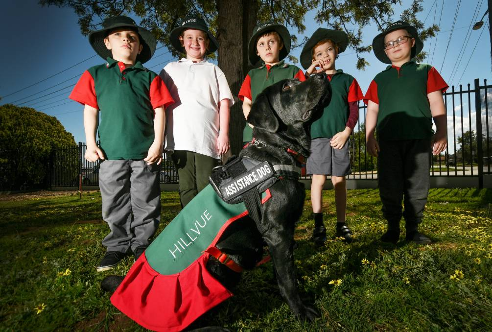 SCHOOLMATE: Hillvue Public School students Brayden Nean, Jazmyne Thompson, Phoenix Orman, Charlie Pennell and Decklan Murphy with Sheeba the labrador, in her new uniform made by Bug's Pet Boutique. Photo: Gareth Gardner